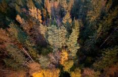 Mets kutsub