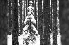 Estonian Nature Tourism